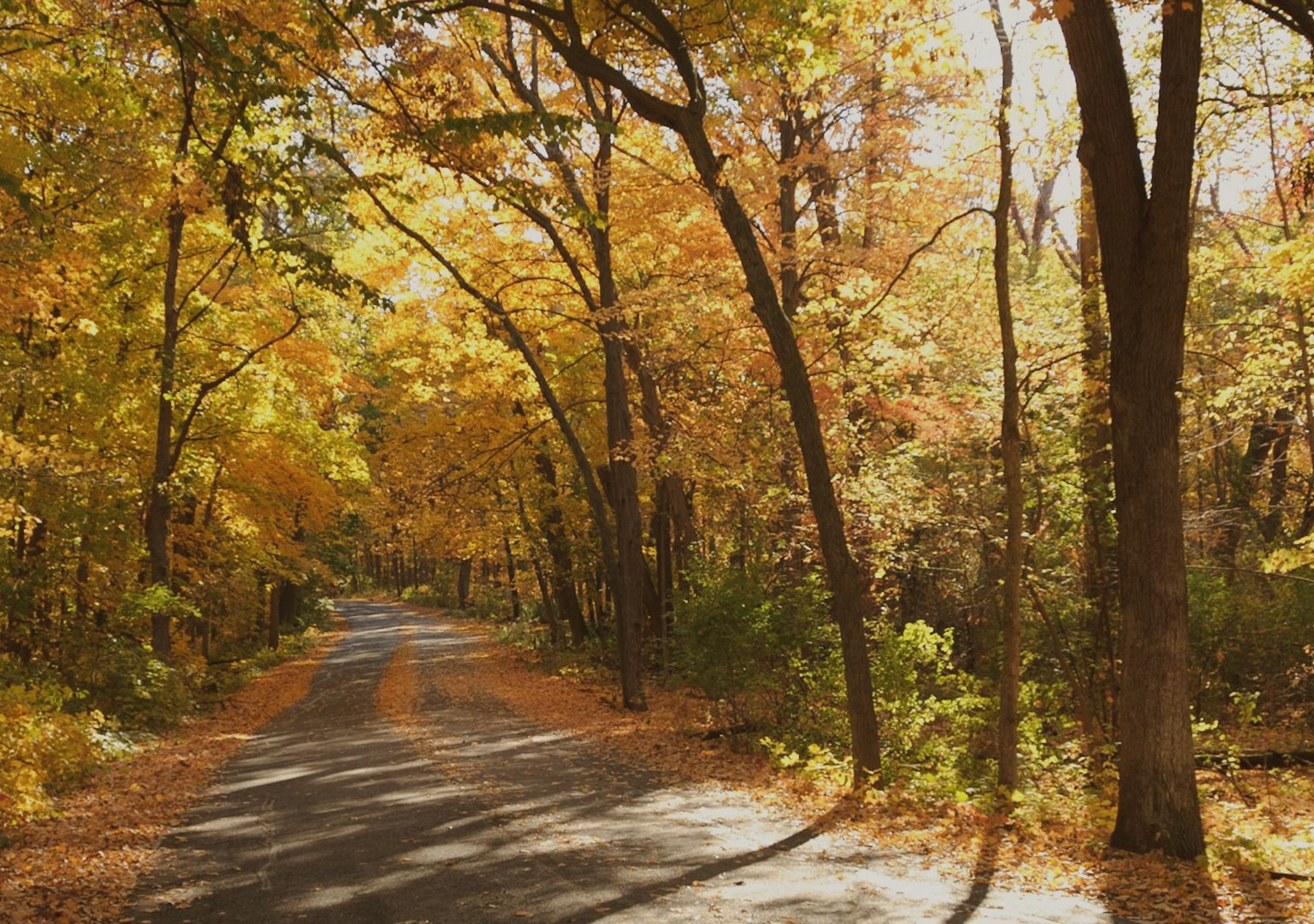 A road extends into the background through wooded area as sunlight shines through trees during autumn