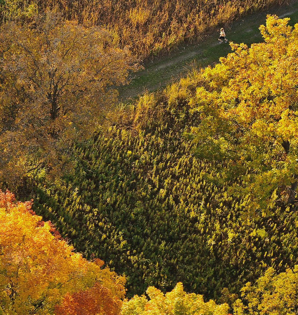 Aerial view of colorful autumn trees with cross-sectioning trails, down which a person is jogging